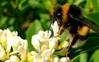 Bio-Distretto online workshop on organic beekeeping