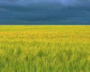 Sustainable farming policy and the european green deal
