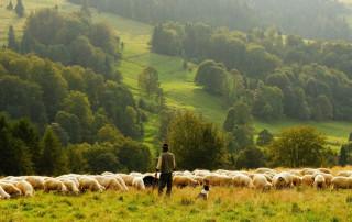 Bio Austria farmers' days 2021