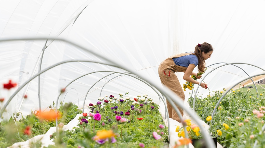 agro-ecology woman planting flowers