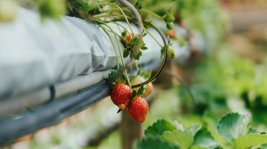 urban rooftop farming